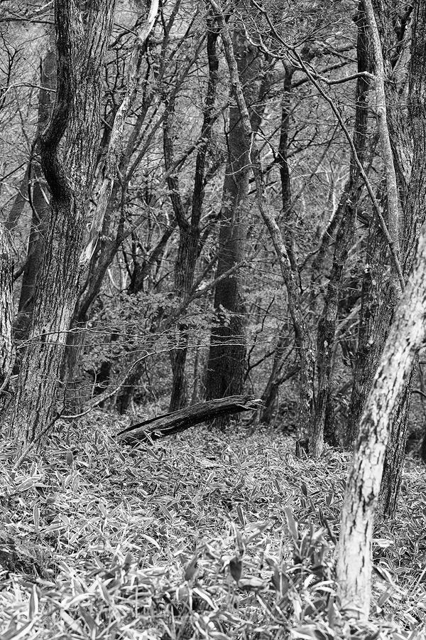 B&W-forest